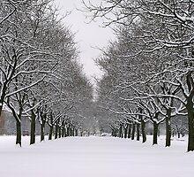 Winter Splendor by Brian Gaynor