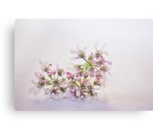 Cilantro flower Canvas Print