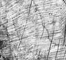 Cracks in timber Textures 3 by Dave Hare