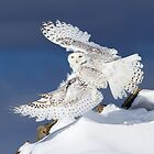 Air Snowy - Snowy Owl by Jim Cumming