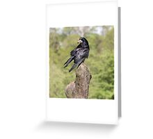 Preening Rook Greeting Card