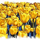 Yellow Tulips - watercolour by PhotosByHealy