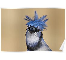 Is that you Don King? - Blue Jay Poster