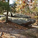 Rock Formation Amid the Trees by Sandy Keeton