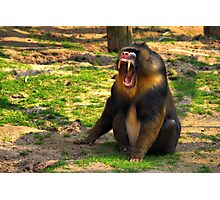 A Boring Day - Mandrill Photographic Print