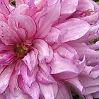 Dahlia named Annette C by JMcCombie