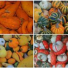 Squashes and Gourds by RedHillDigital
