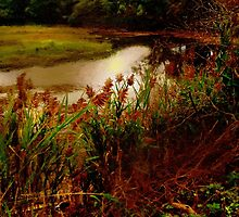 Salt Marsh Sunrise by RC deWinter