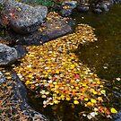 Floating  by Nancy Barrett