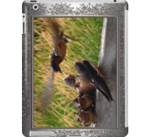 Lunch is Served to the Fourth Baby Barn Swallow iPad Case/Skin
