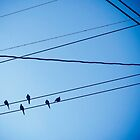 Birds on wires in blue sky by Karol Franks