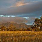 Bluff Knoll at Sunset by Werner Padarin