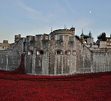 Poppies at the Tower of London - In the evening by InterestingImag