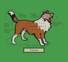 Originaldogco COLLIE ANATOMY by Lisa Rotenberg