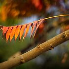 Autumn leaves by TOM KLAUSZ