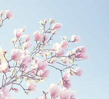 Pink magnolias by Jamesy (happypastel)