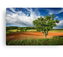 Walnut Tree Canvas Print