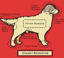 Originaldogco GOLDEN RETRIEVER ANATOMY by Lisa Rotenberg