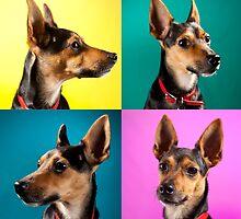 Dora Pinscher Dog by dataq