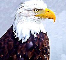 Majestic Bald Eagle by Richenda