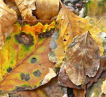 Nature's fall art by walstraasart