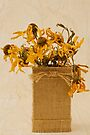 Gloriosa Daisy Flowers Withered by Sandra Foster