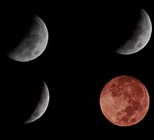 Stages of the Lunar Eclipse on October 8, 2014 by barnsis