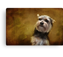 Meet Chalky! Canvas Print