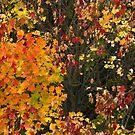 A cornucopia of leaves by MarianBendeth