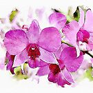 Pink Phalaenopsis - watercolour by PhotosByHealy