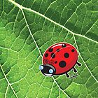 Dot the Lady Bug 2 by wolfehanson