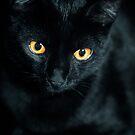 Black Cat by Keith G. Hawley