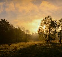 The Morning by Joey Kuipers