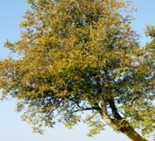 Autumn tree Sticker