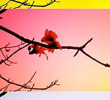Flower by GlorifiedNormal