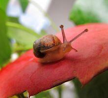 Hi Snail! by sammiejayjay