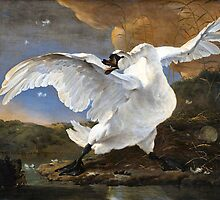 The Threatened Swan by Jan Asselyn 1615-1652 by Old-Time-Images