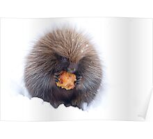 Porcupine with apple Poster