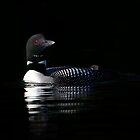 Shy - Common Loon by Jim Cumming