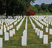 Arlington Cemetery (Heart Ache) by AnnDixon