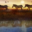 moving north zebras and ibis   by R Christopher  Vest
