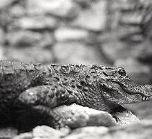 Crocodile (Alligator?) in New Mexico by dearmoon