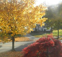 Fall in My Front Yard by BarbBarcikKeith