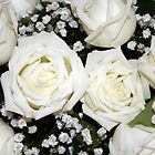 White Roses by Robyn Williams