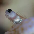 Humble Goby's meal by James Deverich