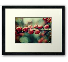 Red Winter Berries Framed Print