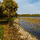 Autumn At East Harbor State Park 4 by SRowe Art