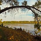Autumn At East Harbor State Park 5 by SRowe Art