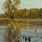 Autumn at East Harbor State Park 6 by SRowe Art