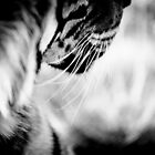 Abstract Tiger in Black and White by Beth Wold